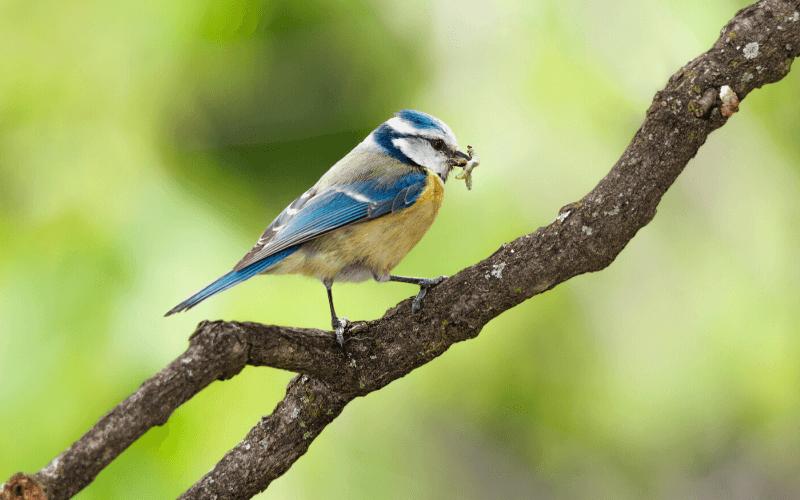 Tuintip #1 Maak uw tuin aantrekkelijk voor insecten en vogels.