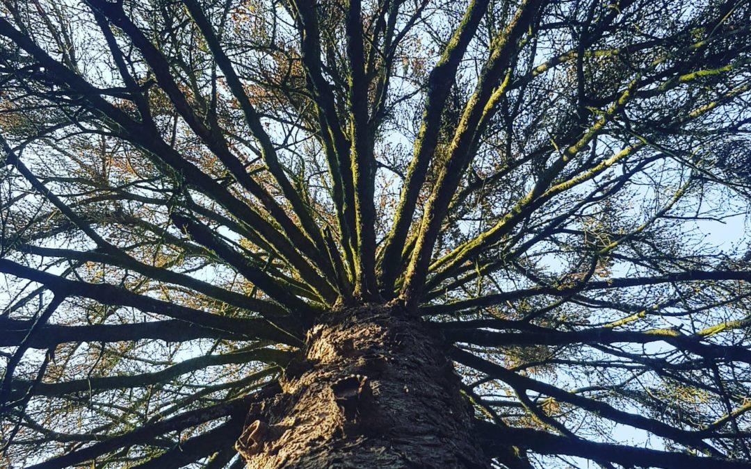 Tuintip #3 Zorg voor natuurlijke schaduw: Plant een boom!